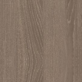 Дуб орлеанский коричневый