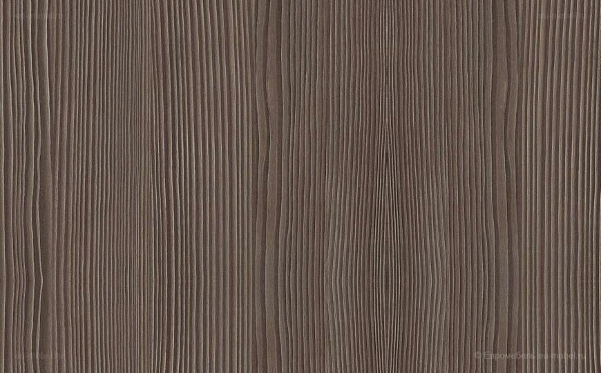 Сосна авола коричневая